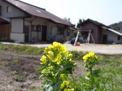 20090331genbasokuryou.jpg