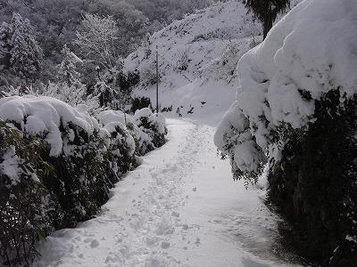 20100107yuki.jpg