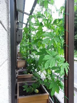 20110629goya2.jpg