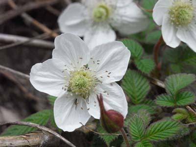 FieldStrawberry.jpg