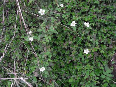 FieldStrawberry2.jpg